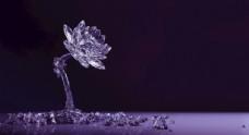 莲花水晶紫色晶体