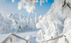 冬季小清新风景