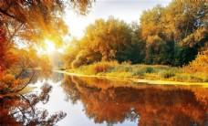 金色秋天枫叶唯美清新风景