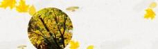 PSD设计素材 树 方框