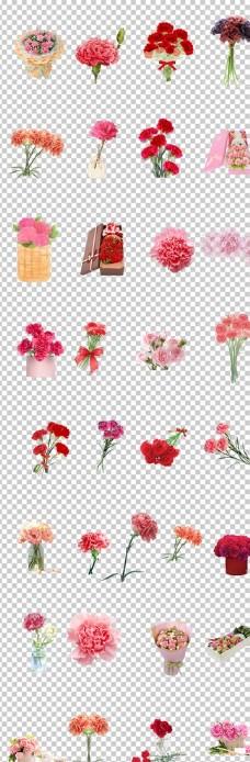花朵康乃馨新鲜鲜艳鲜花康乃馨