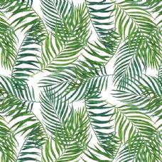 绿色大叶子