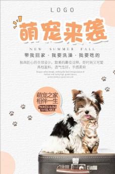 可爱宠物促销海报