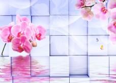 蝴蝶兰背景墙