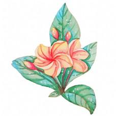 水彩植物花开