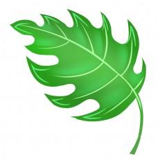 一片绿色叶子插图