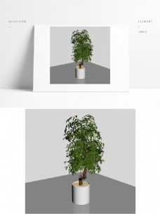 精细盆景植物模型