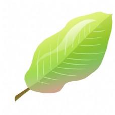 热带植物大叶子