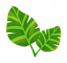 两片绿色叶子