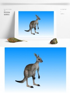 动物袋鼠3d模型