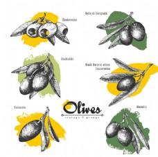 橄榄油广告