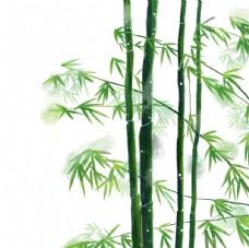 竹子 富贵竹