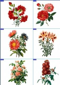 复古手绘植物花卉插画